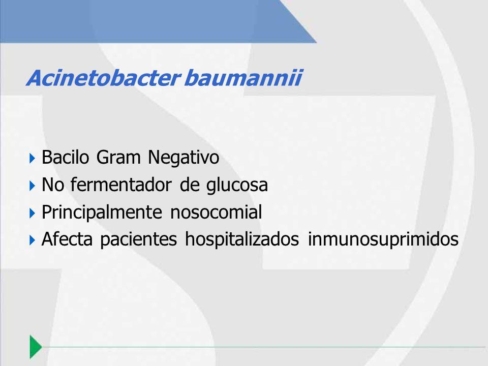 Acinetobacter baumannii Bacilo Gram Negativo No fermentador de glucosa Principalmente nosocomial Afecta pacientes hospitalizados inmunosuprimidos