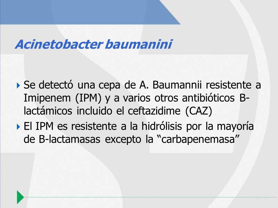Acinetobacter baumanini Se detectó una cepa de A. Baumannii resistente a Imipenem (IPM) y a varios otros antibióticos B- lactámicos incluido el ceftaz