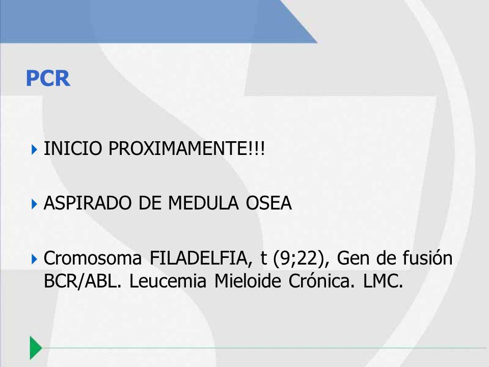 PCR INICIO PROXIMAMENTE!!! ASPIRADO DE MEDULA OSEA Cromosoma FILADELFIA, t (9;22), Gen de fusión BCR/ABL. Leucemia Mieloide Crónica. LMC.