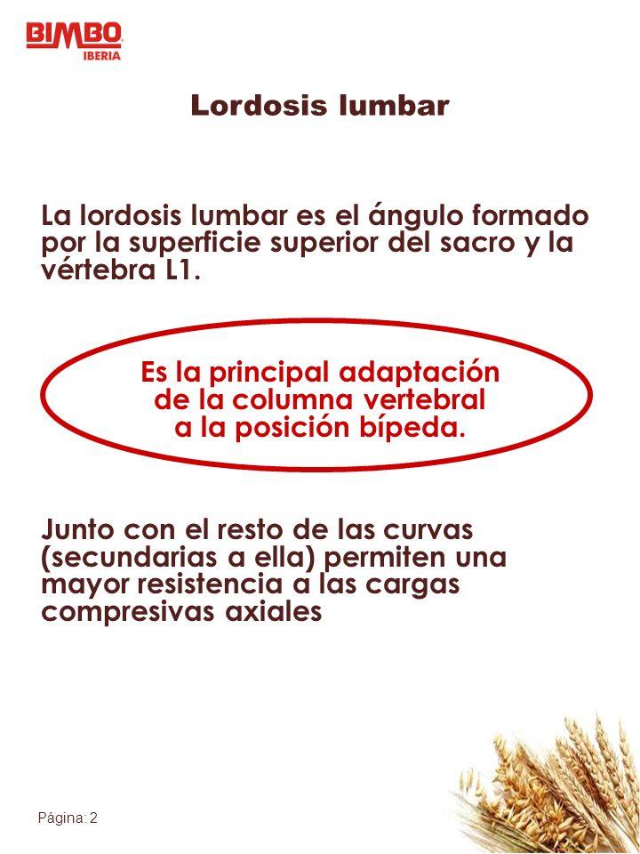 Página: 2 Lordosis lumbar La lordosis lumbar es el ángulo formado por la superficie superior del sacro y la vértebra L1.