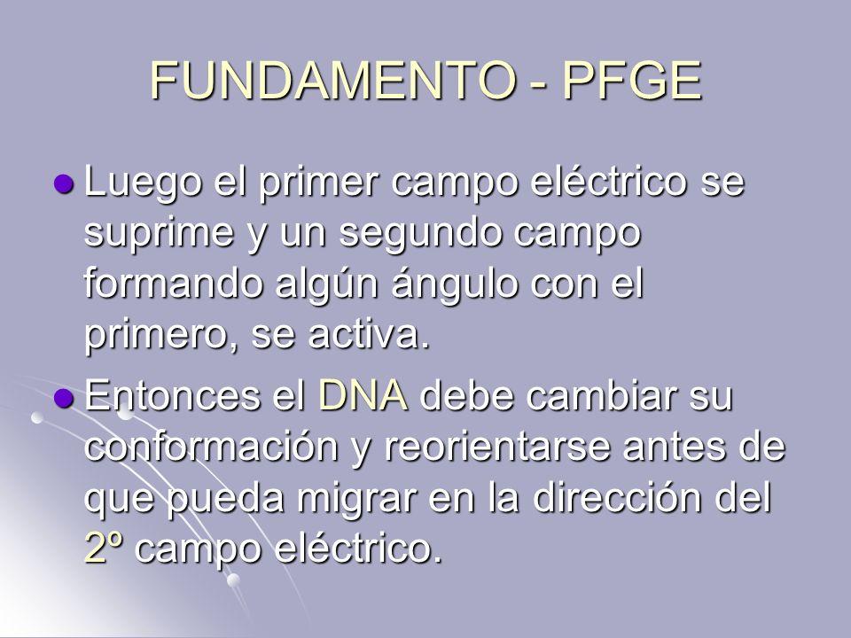 FUNDAMENTO - PFGE Luego el primer campo eléctrico se suprime y un segundo campo formando algún ángulo con el primero, se activa. Luego el primer campo