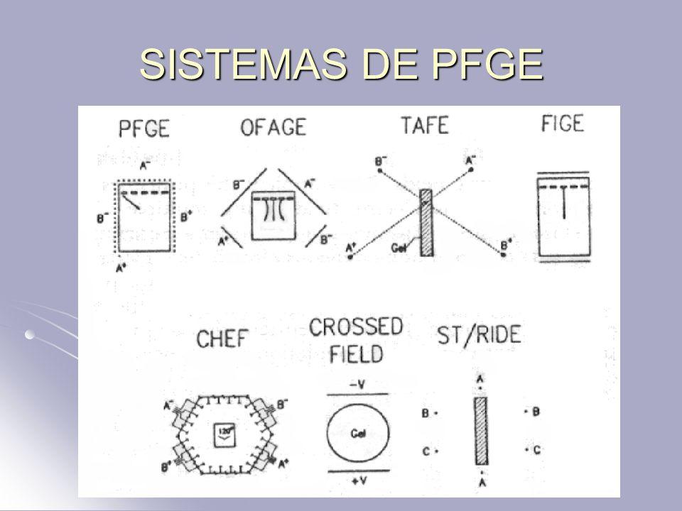 SISTEMAS DE PFGE