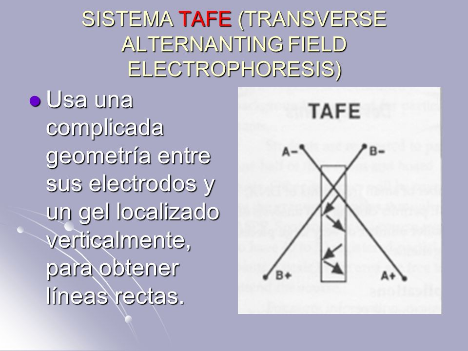 SISTEMA TAFE (TRANSVERSE ALTERNANTING FIELD ELECTROPHORESIS) Usa una complicada geometría entre sus electrodos y un gel localizado verticalmente, para
