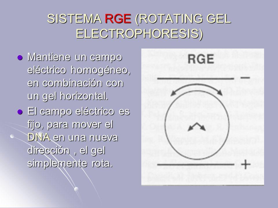 SISTEMA RGE (ROTATING GEL ELECTROPHORESIS) Mantiene un campo eléctrico homogéneo, en combinación con un gel horizontal. Mantiene un campo eléctrico ho