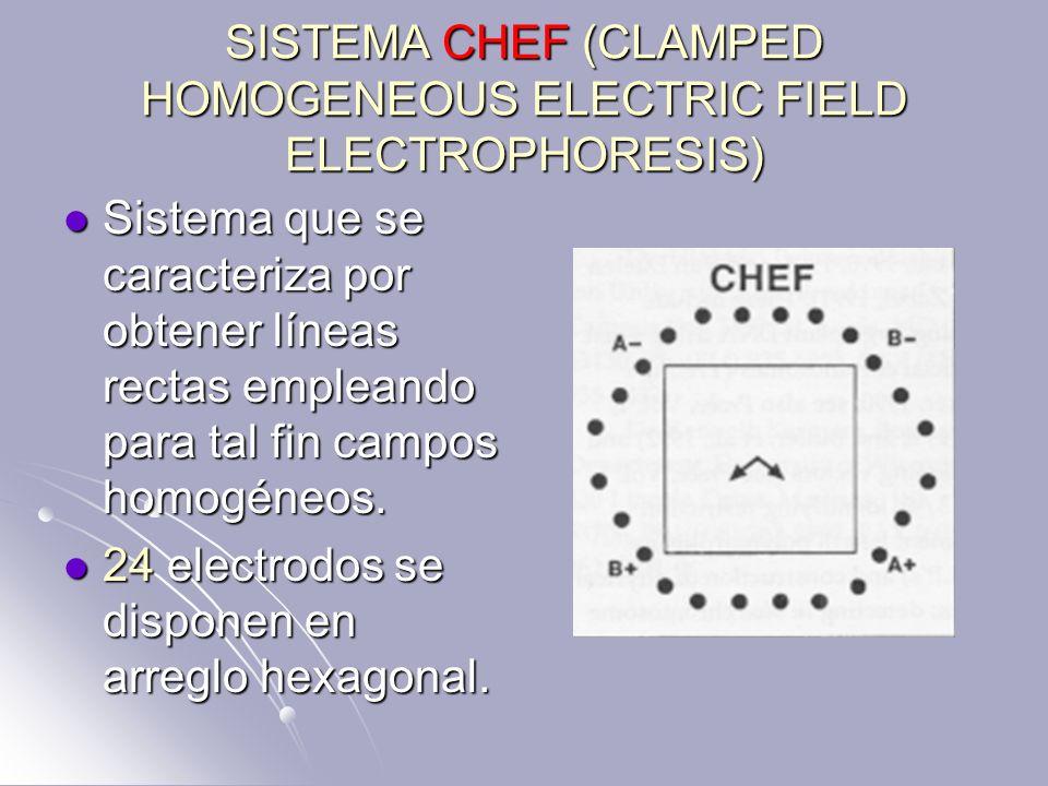 SISTEMA CHEF (CLAMPED HOMOGENEOUS ELECTRIC FIELD ELECTROPHORESIS) Sistema que se caracteriza por obtener líneas rectas empleando para tal fin campos h