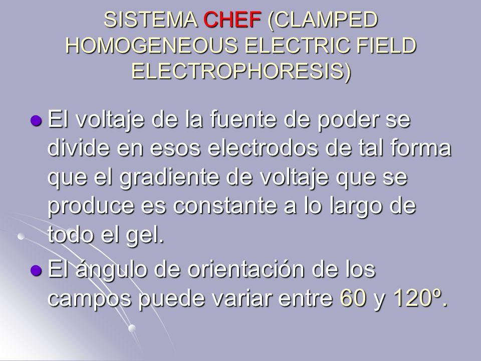 SISTEMA CHEF (CLAMPED HOMOGENEOUS ELECTRIC FIELD ELECTROPHORESIS) El voltaje de la fuente de poder se divide en esos electrodos de tal forma que el gr
