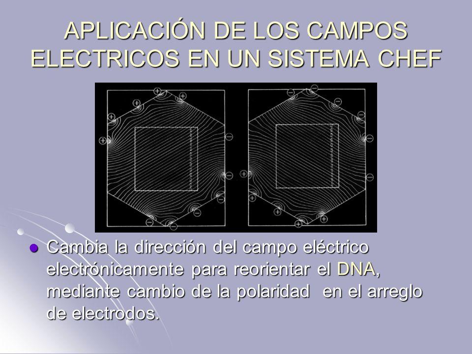 APLICACIÓN DE LOS CAMPOS ELECTRICOS EN UN SISTEMA CHEF Cambia la dirección del campo eléctrico electrónicamente para reorientar el DNA, mediante cambi