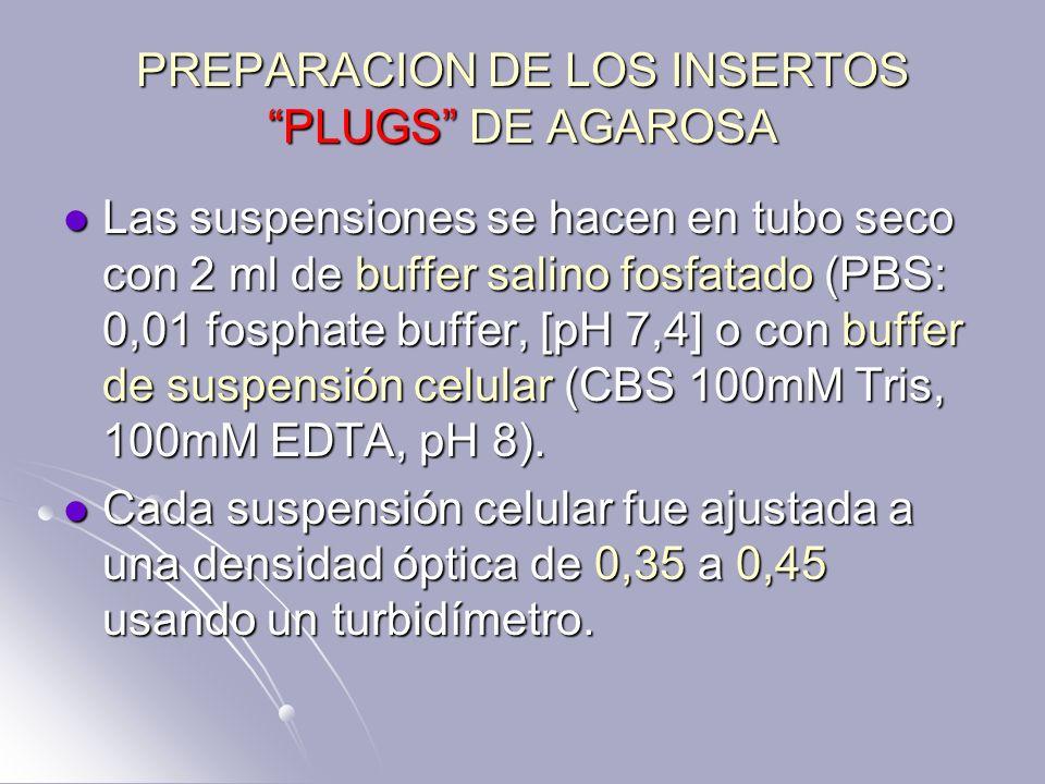 PREPARACION DE LOS INSERTOS PLUGS DE AGAROSA Las suspensiones se hacen en tubo seco con 2 ml de buffer salino fosfatado (PBS: 0,01 fosphate buffer, [p