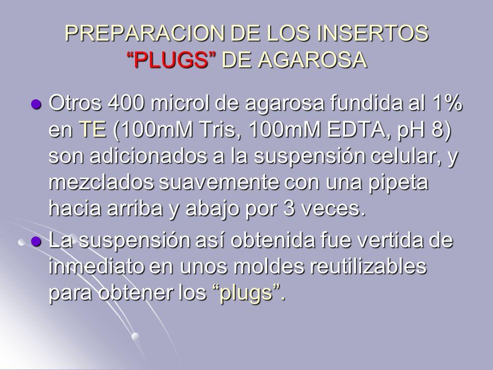 PREPARACION DE LOS INSERTOS PLUGS DE AGAROSA Otros 400 microl de agarosa fundida al 1% en TE (100mM Tris, 100mM EDTA, pH 8) son adicionados a la suspe