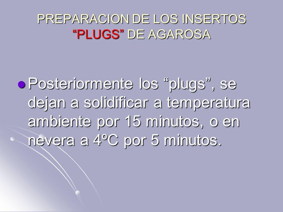PREPARACION DE LOS INSERTOS PLUGS DE AGAROSA Posteriormente los plugs, se dejan a solidificar a temperatura ambiente por 15 minutos, o en nevera a 4ºC