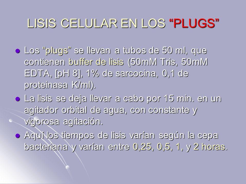 LISIS CELULAR EN LOS PLUGS Los plugs se llevan a tubos de 50 ml, que contienen buffer de lisis (50mM Tris, 50mM EDTA, [pH 8], 1% de sarcocina, 0,1 de