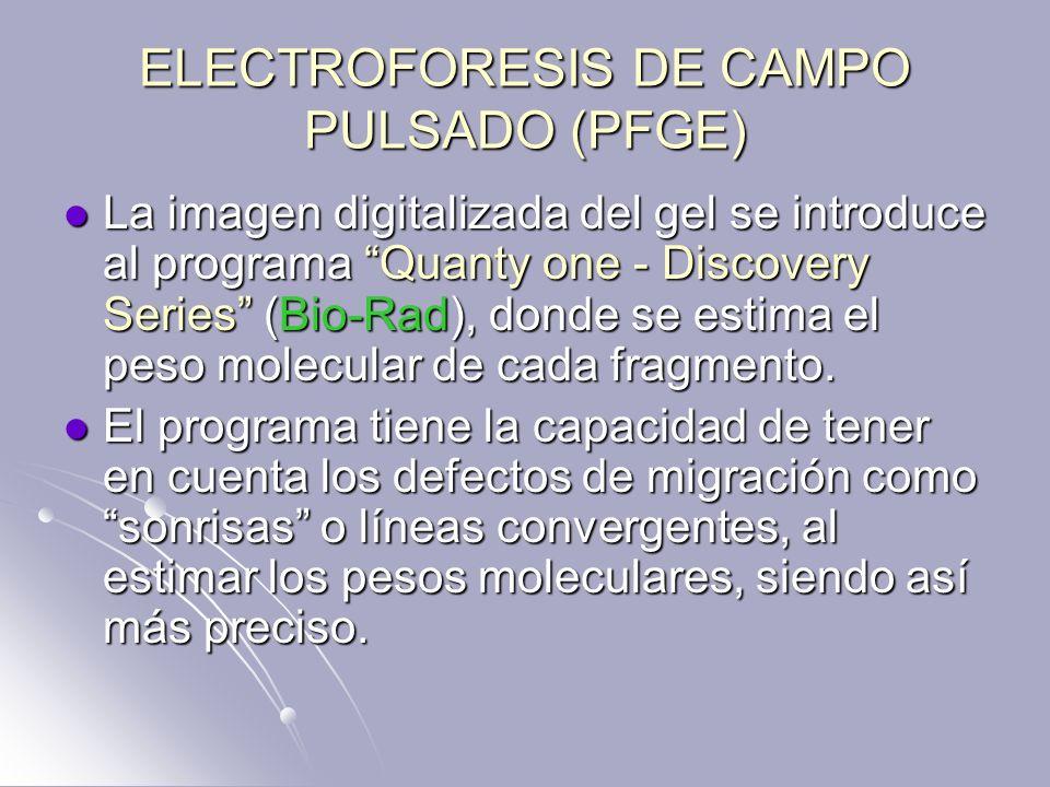 ELECTROFORESIS DE CAMPO PULSADO (PFGE) La imagen digitalizada del gel se introduce al programa Quanty one - Discovery Series (Bio-Rad), donde se estim