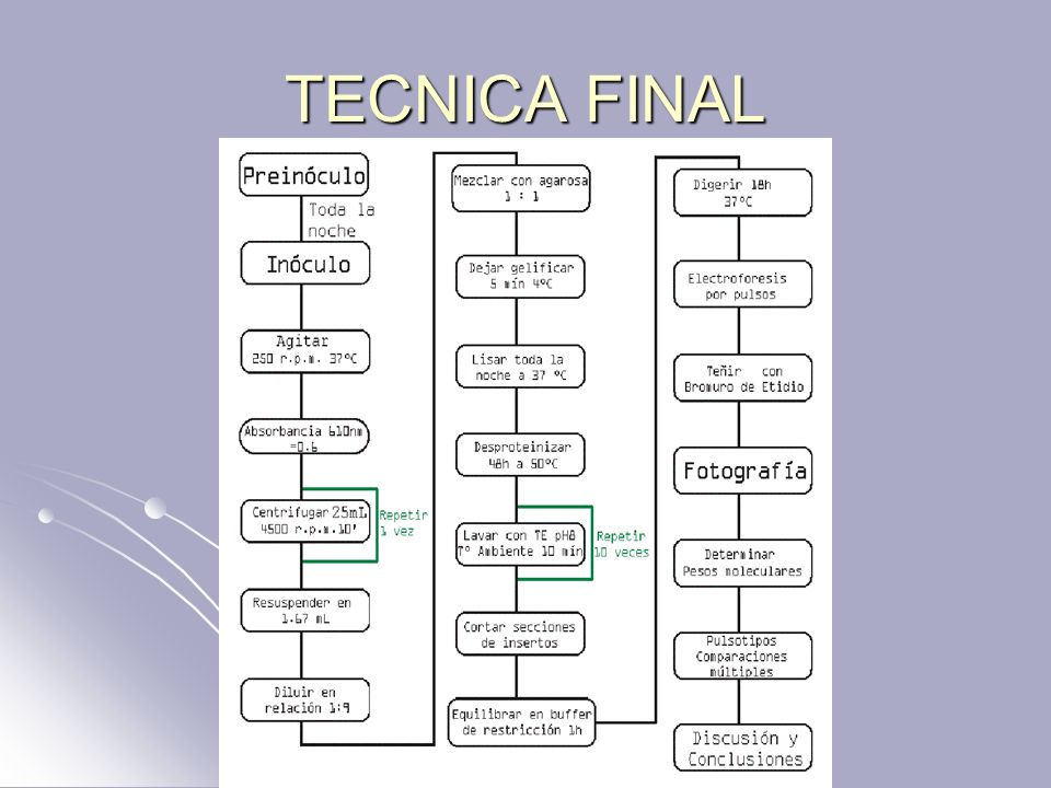 TECNICA FINAL