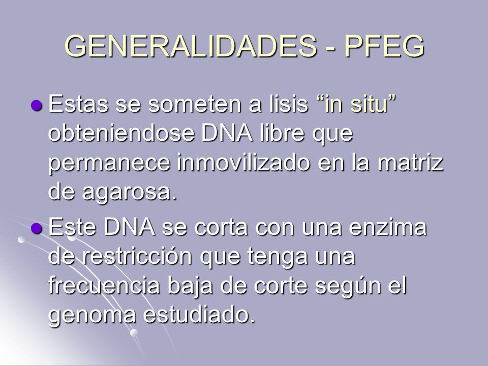 GENERALIDADES - PFEG Estas se someten a lisis in situ obteniendose DNA libre que permanece inmovilizado en la matriz de agarosa. Estas se someten a li