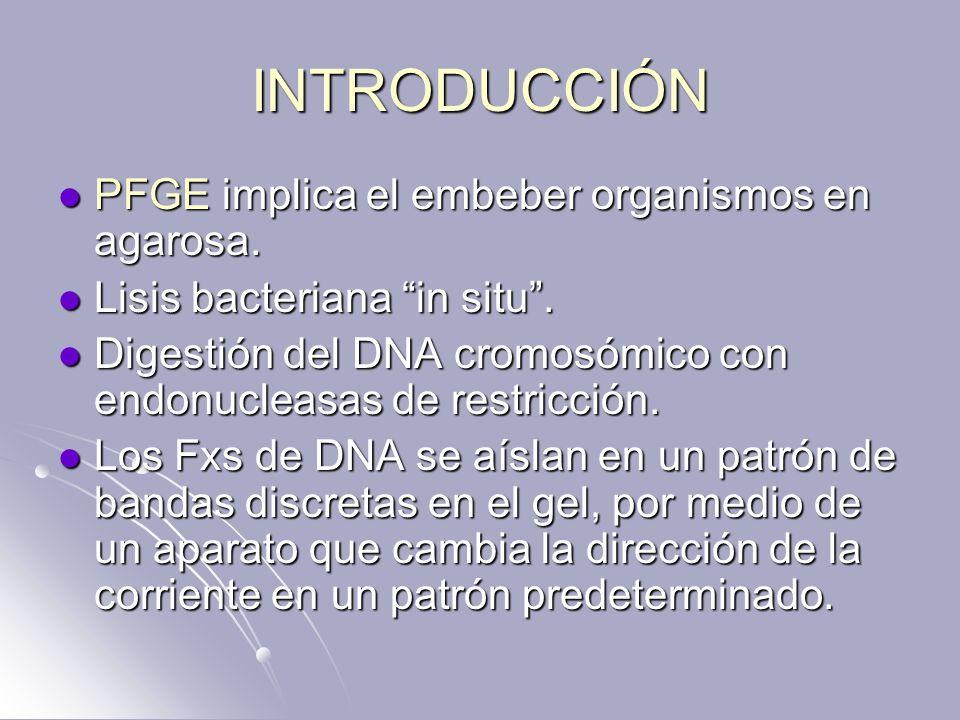 INTRODUCCIÓN PFGE implica el embeber organismos en agarosa. PFGE implica el embeber organismos en agarosa. Lisis bacteriana in situ. Lisis bacteriana