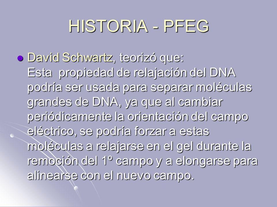 HISTORIA - PFEG David Schwartz, teorizó que: Esta propiedad de relajación del DNA podría ser usada para separar moléculas grandes de DNA, ya que al ca