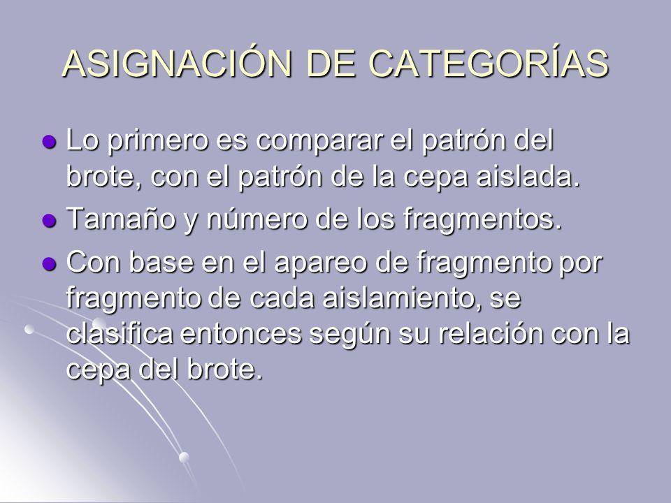 ASIGNACIÓN DE CATEGORÍAS Lo primero es comparar el patrón del brote, con el patrón de la cepa aislada. Lo primero es comparar el patrón del brote, con