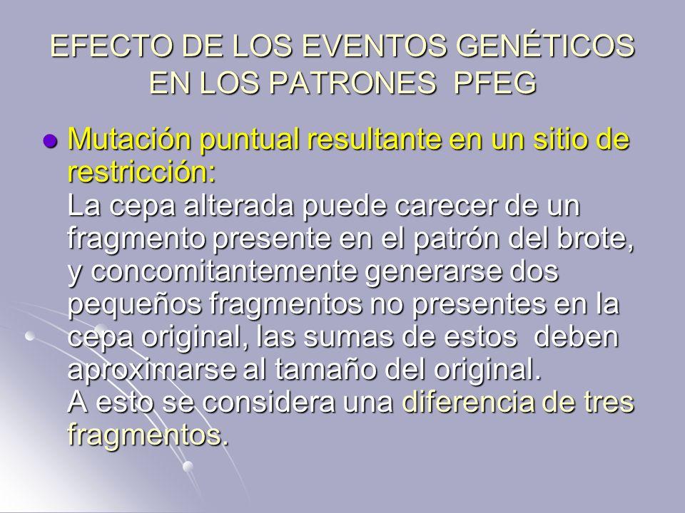 EFECTO DE LOS EVENTOS GENÉTICOS EN LOS PATRONES PFEG Mutación puntual resultante en un sitio de restricción: La cepa alterada puede carecer de un frag