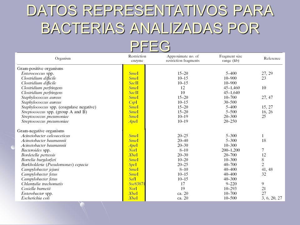 DATOS REPRESENTATIVOS PARA BACTERIAS ANALIZADAS POR PFEG