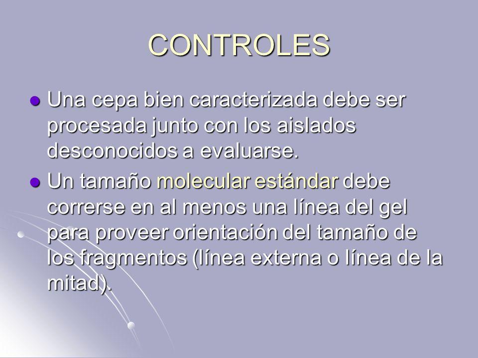 CONTROLES Una cepa bien caracterizada debe ser procesada junto con los aislados desconocidos a evaluarse. Una cepa bien caracterizada debe ser procesa