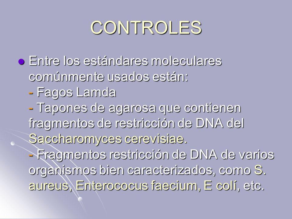 CONTROLES Entre los estándares moleculares comúnmente usados están: - Fagos Lamda - Tapones de agarosa que contienen fragmentos de restricción de DNA