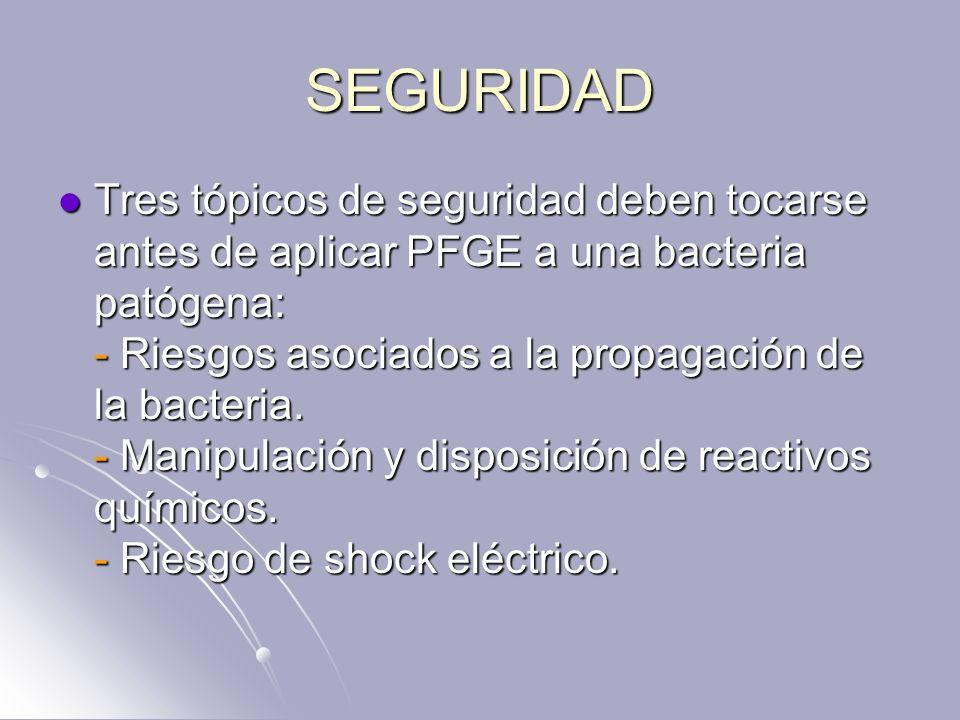 SEGURIDAD Tres tópicos de seguridad deben tocarse antes de aplicar PFGE a una bacteria patógena: - Riesgos asociados a la propagación de la bacteria.