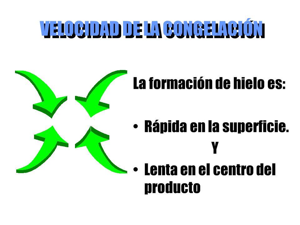 VELOCIDAD DE LA CONGELACIÓN La formación de hielo es: Rápida en la superficie. Y Lenta en el centro del producto