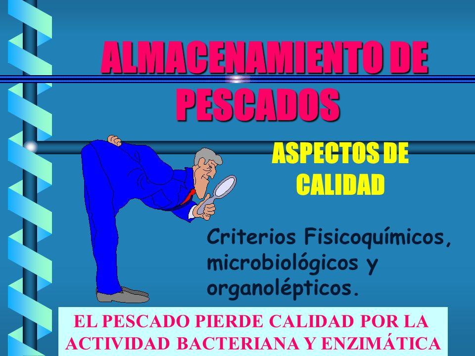 CRITERIOS ORGANOLÉPTICOS DE LA CALIDAD DEL PESCADO BUENA CALIDAD FACTOR MALACALIDAD OJOS OLOR COLOR TEXTURA VIENTRE ORGANOS TEJIDO MUSCULAR Brillantes, transparentes, saltones.