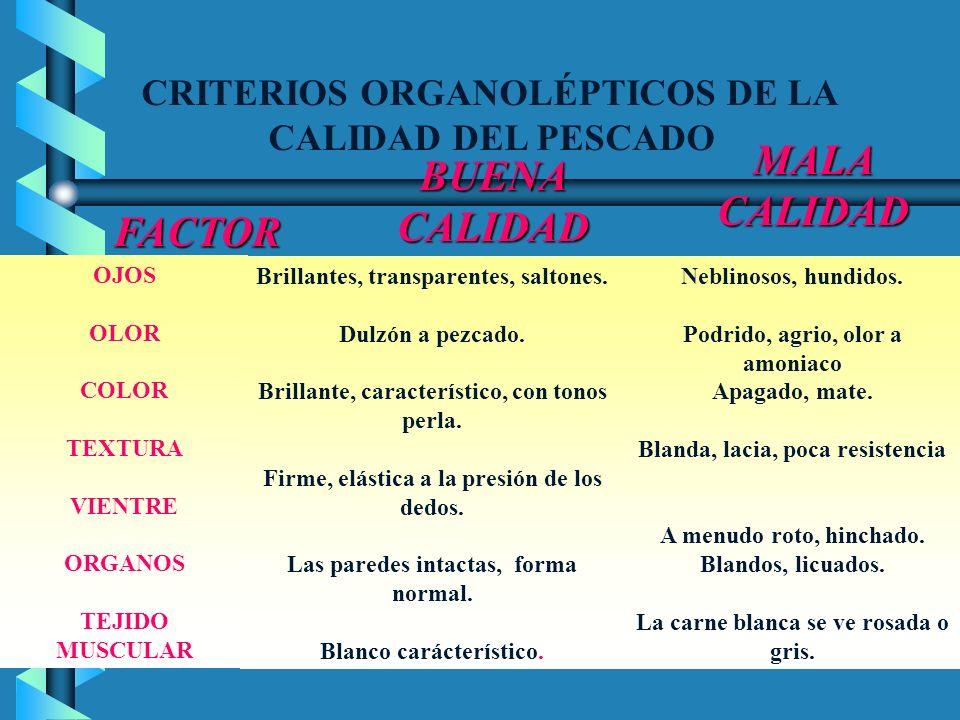 CRITERIOS ORGANOLÉPTICOS DE LA CALIDAD DEL PESCADO BUENA CALIDAD FACTOR MALACALIDAD OJOS OLOR COLOR TEXTURA VIENTRE ORGANOS TEJIDO MUSCULAR Brillantes