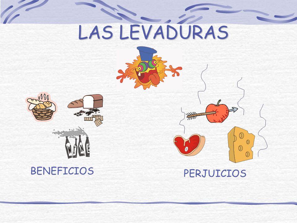 ¿DONDE CRECEN LAS BACTERIAS? LACTEOS FRUTAS Y VERDURAS CARNICOSGALLETAS