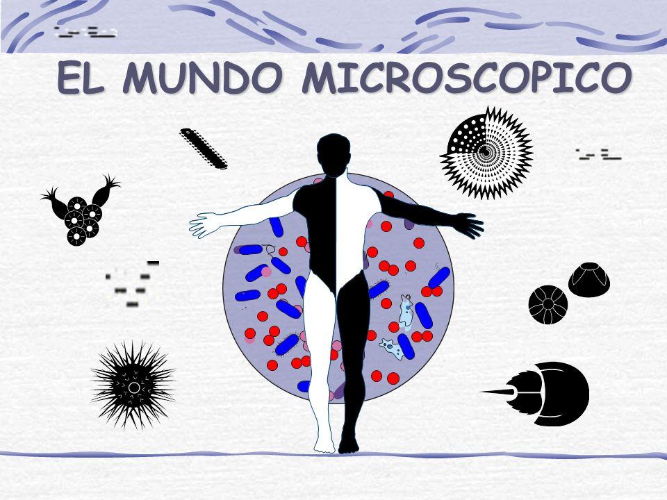 ¿ QUE ES LA MICROBIOLOGÍA? CIENCIACIENCIA DISCIPLINADISCIPLINA ESTUDIOESTUDIO MICROMUNDOMICROMUNDO