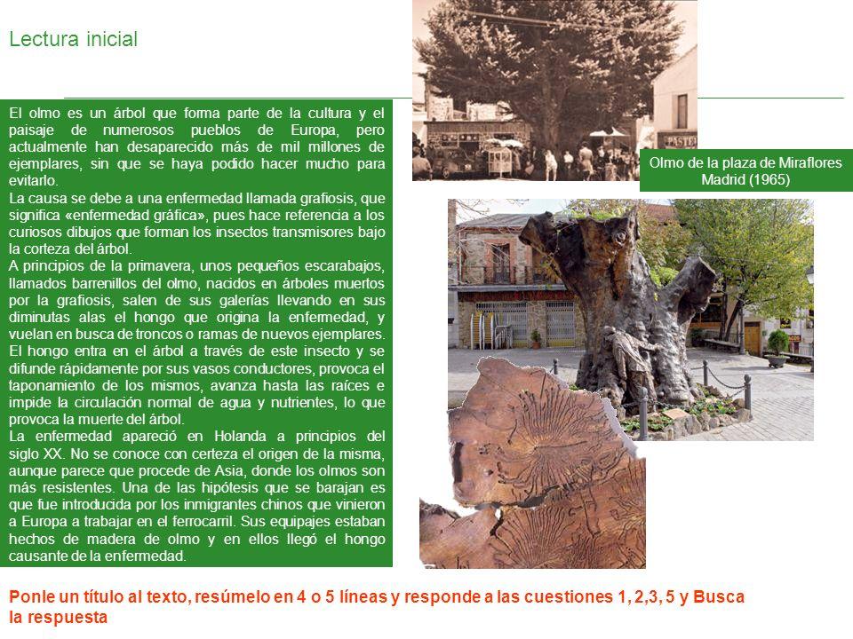Lectura inicial El olmo es un árbol que forma parte de la cultura y el paisaje de numerosos pueblos de Europa, pero actualmente han desaparecido más d