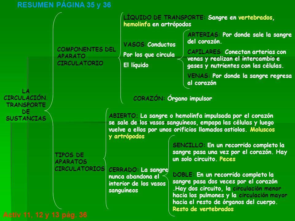 LA CIRCULACIÓN. TRANSPORTE DE SUSTANCIAS TIPOS DE APARATOS CIRCULATORIOS RESUMEN PÁGINA 35 y 36 Activ 11, 12 y 13 pág. 36 COMPONENTES DEL APARATO CIRC