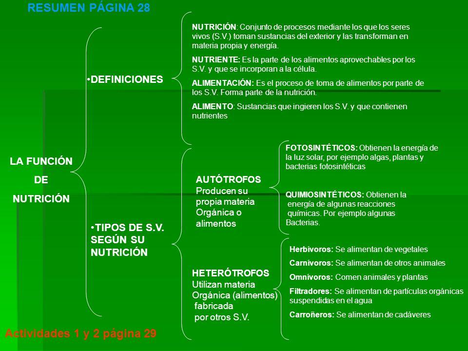 La función de nutrición ORGANISMOS AUTÓTROFOS Organismos fotosintéticos Organismos quimiosintéticos ORGANISMOS HETERÓTROFOS Herbívoros Carnívoros Filtradores Omnívoros Carroñeros