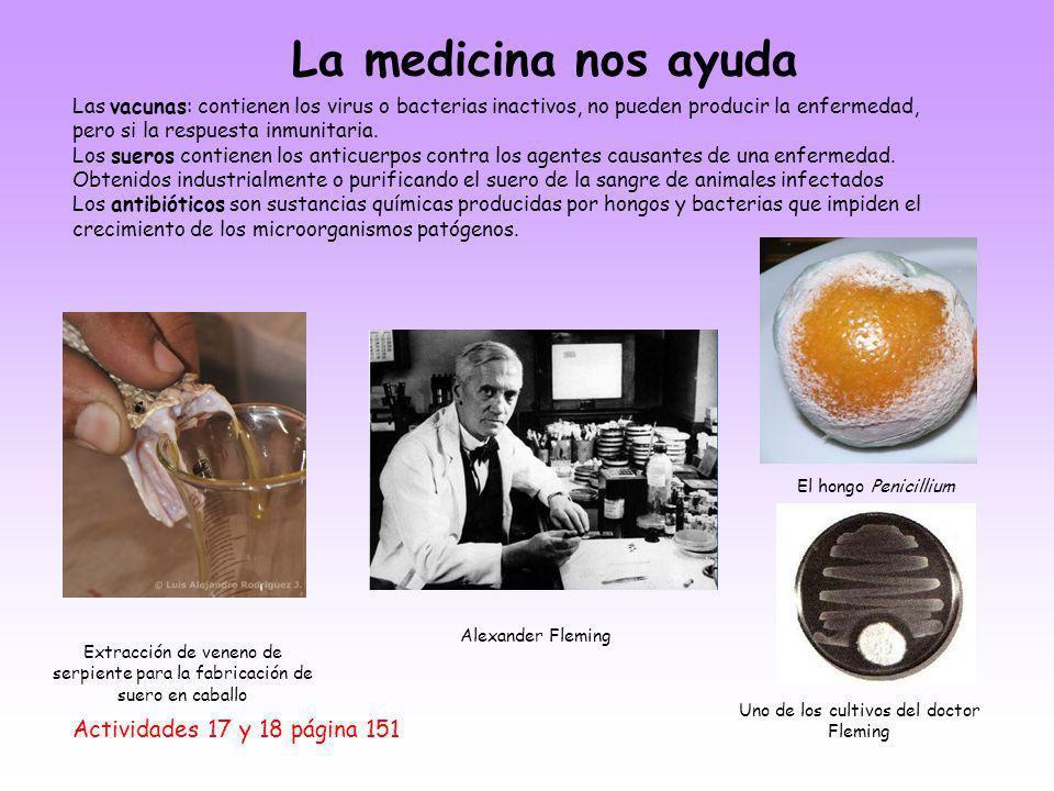La medicina nos ayuda Actividades 17 y 18 página 151 Las vacunas: contienen los virus o bacterias inactivos, no pueden producir la enfermedad, pero si