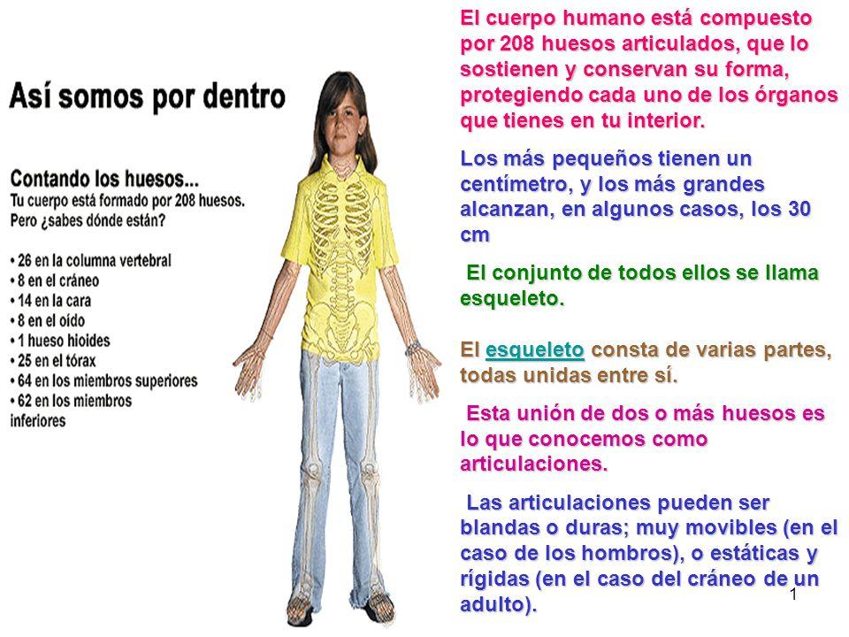 1 El cuerpo humano está compuesto por 208 huesos articulados, que lo sostienen y conservan su forma, protegiendo cada uno de los órganos que tienes en