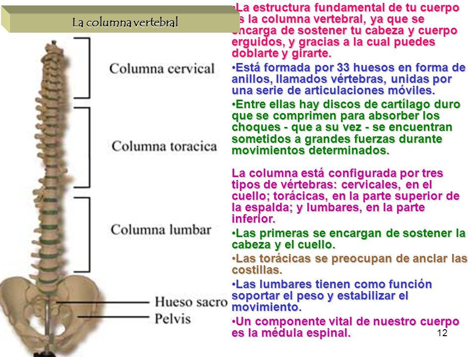 12 La estructura fundamental de tu cuerpo es la columna vertebral, ya que se encarga de sostener tu cabeza y cuerpo erguidos, y gracias a la cual pued