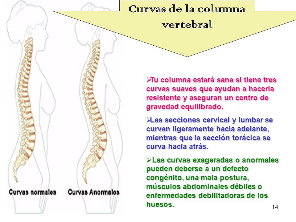 14 Tu columna estará sana si tiene tres curvas suaves que ayudan a hacerla resistente y aseguran un centro de gravedad equilibrado. Tu columna estará