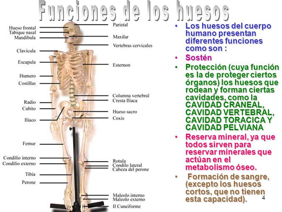 4 Los huesos del cuerpo humano presentan diferentes funciones como son :Los huesos del cuerpo humano presentan diferentes funciones como son : SosténS