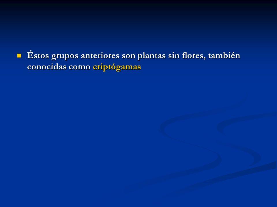 Éstos grupos anteriores son plantas sin flores, también conocidas como criptógamas Éstos grupos anteriores son plantas sin flores, también conocidas c