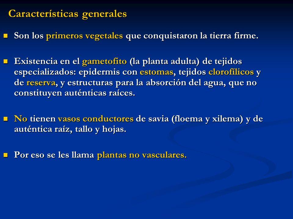 Características generales Son los primeros vegetales que conquistaron la tierra firme. Existencia en el gametofito (la planta adulta) de tejidos espec