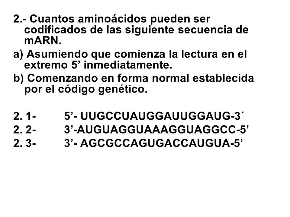2.- Cuantos aminoácidos pueden ser codificados de las siguiente secuencia de mARN. a) Asumiendo que comienza la lectura en el extremo 5 inmediatamente