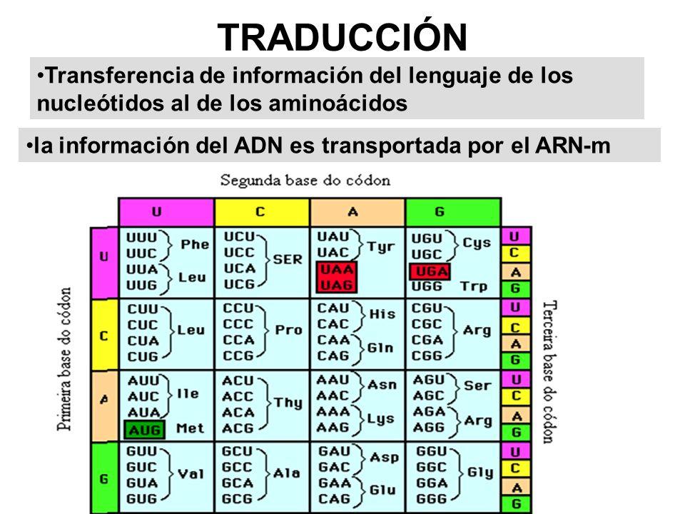 Elementos que intervienen en la traducción RNA-m, RNA-t.