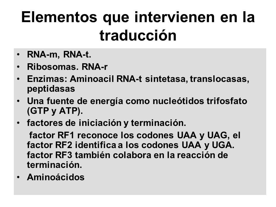 Elementos que intervienen en la traducción RNA-m, RNA-t. Ribosomas. RNA-r Enzimas: Aminoacil RNA-t sintetasa, translocasas, peptidasas Una fuente de e