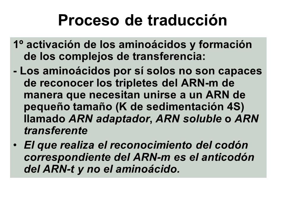 Proceso de traducción 1º activación de los aminoácidos y formación de los complejos de transferencia: - Los aminoácidos por sí solos no son capaces de