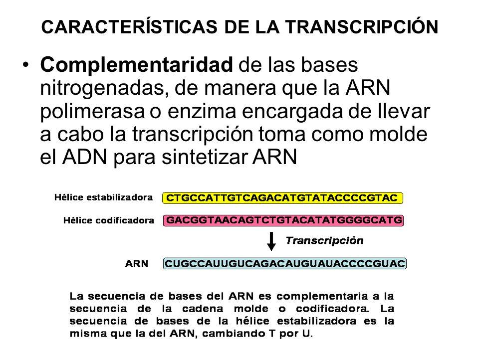 CARACTERÍSTICAS DE LA TRANSCRIPCIÓN Complementaridad de las bases nitrogenadas, de manera que la ARN polimerasa o enzima encargada de llevar a cabo la