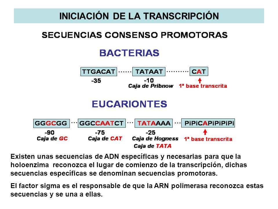 Existen unas secuencias de ADN específicas y necesarias para que la holoenzima reconozca el lugar de comienzo de la transcripción, dichas secuencias e