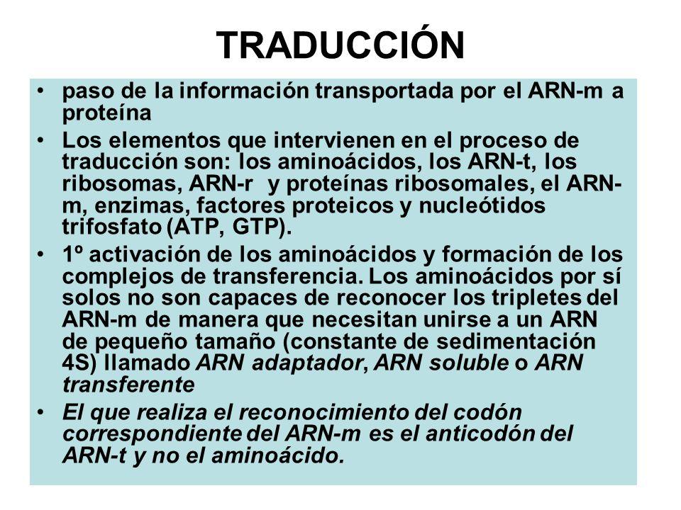 TRADUCCIÓN paso de la información transportada por el ARN-m a proteína Los elementos que intervienen en el proceso de traducción son: los aminoácidos,