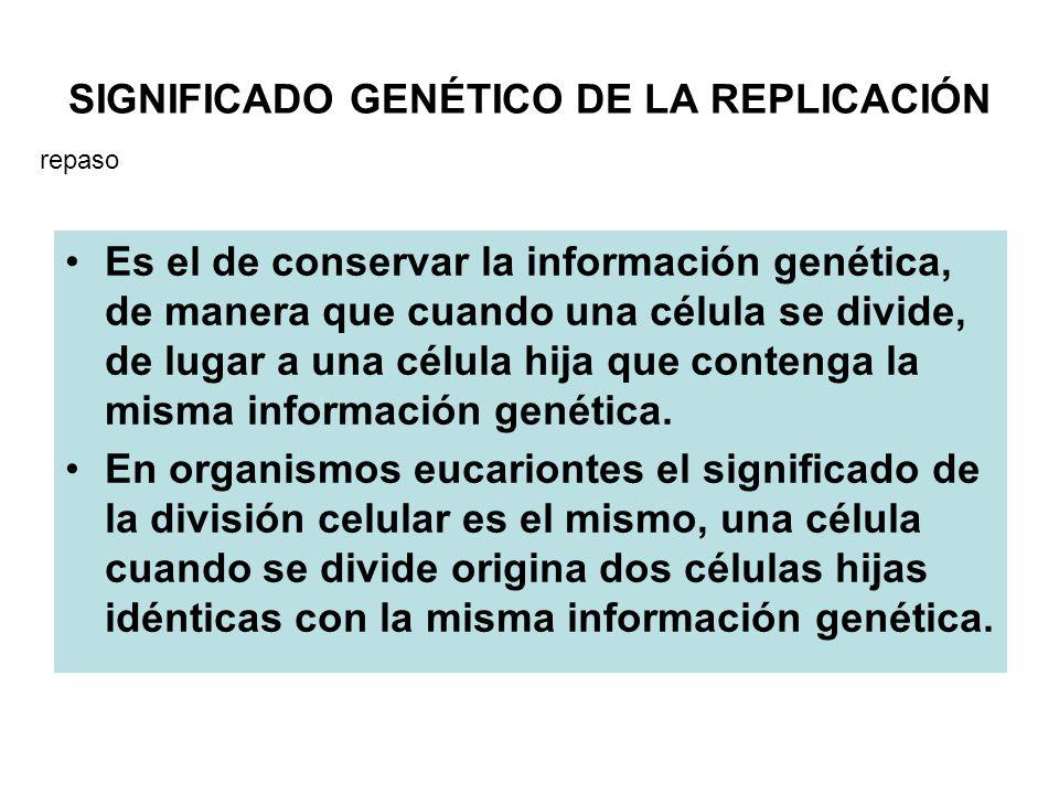 En los organismos eucariontes, para cada gen solamente se transcribe un hebra de ADN (la codificadora), de forma que genes distintos del mismo cromosoma pueden utilizar como codificadora una hélice diferente a la de otros genes