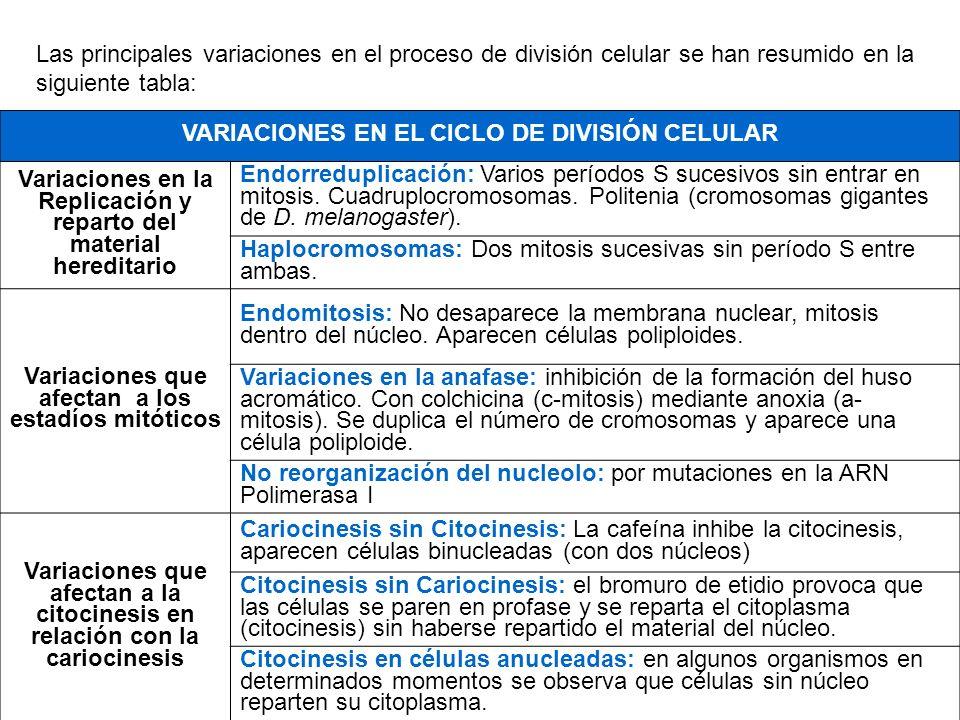 Las principales variaciones en el proceso de división celular se han resumido en la siguiente tabla: VARIACIONES EN EL CICLO DE DIVISIÓN CELULAR Varia